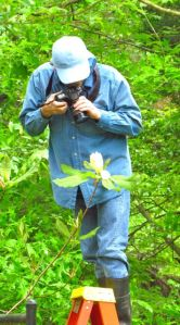 Wonder Spouse scales new heights to photograph a Fraser Magnolia flower.