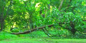 Victim of an overflowing creek