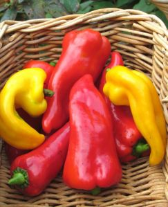 Carmen Bull's Horn Italian Peppers and some yellow Italian heirlooms