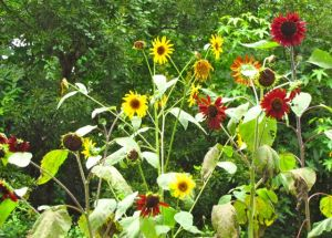 I'll tell you more about this sunflower mix soon.