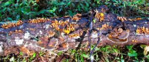 An array of lichens adorning a fallen dead tree branch.