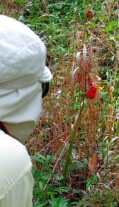 Birthday Boy shooting a Jack-in-the-Pulpit fruit.