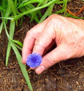 Wonder Spouse's hand provides scale, demonstrating the small size of the flowers.