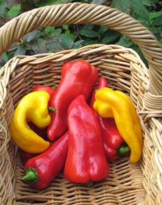 Sunset Mix peppers