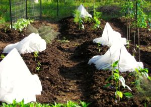 Squashes grow large within their tents, surrounded by peppers, flowers, and herbs.