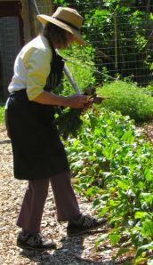 Carol harvesting beets.