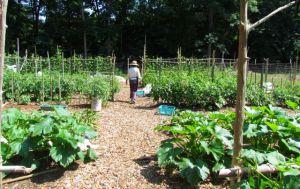 CORA garden and Carol