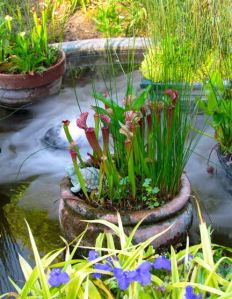 May 24 -- the water garden flourishes.