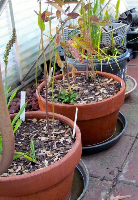 Greenhouse Preparation Piedmont Gardener