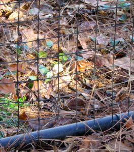 Base of north-slope deer fence gate. Note how the bottom is less than an inch above the ground.