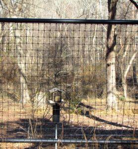 A deer fence gate on my north slope garden.