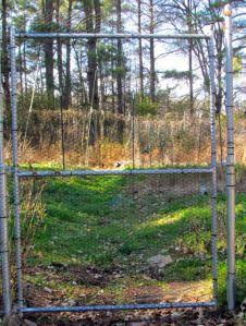 Deer fence gate to vegetable garden.
