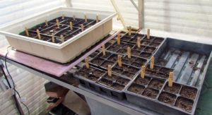 All seeds sowed, it's time to close up the greenhouse and let them work on their defiance of winter.