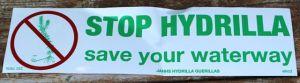 hydrilla bumper sticker