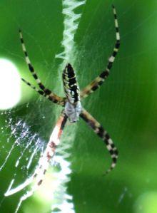 spider close