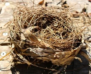 Empty nest syndrome?