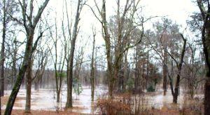 Muddy water everywhere.
