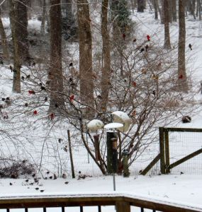January 23 snowfall brought even more birds to the feeders.