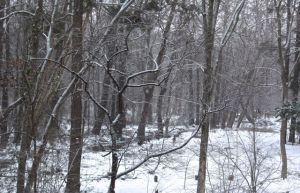 January 23 snow flurries on our floodplain. The creek is on the left side of the photo.