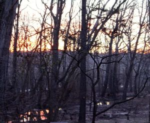 Sunrise on the floodplain the day before frozen precipitation arrived.