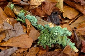 Soon spring leaves will match the greens of the lichens.