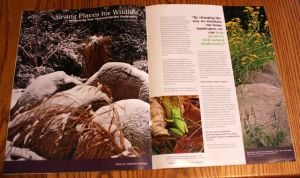 First two pages of my article in Conservation Gardener