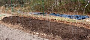 We added metal hoops to support the garden cloth fabric we use to protect the greens from spring frosts, and the bed was ready for planting.
