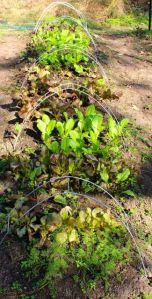 Salad Season, Part II