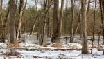 frozen-beaver-pond