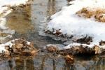icy-flowing-creek