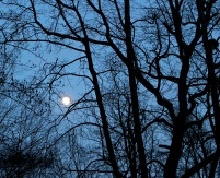 As the sky darkened, the moon rose to dominance. The ice-covered landscape was illuminated nearly to daylight levels.