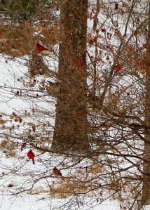 After the snow stopped, hungry birds bided their time on nearby bushes, waiting for their turns at the feeders.