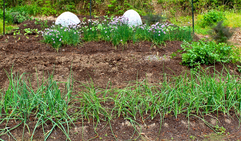 Vegetable Gardening | Piedmont Gardener