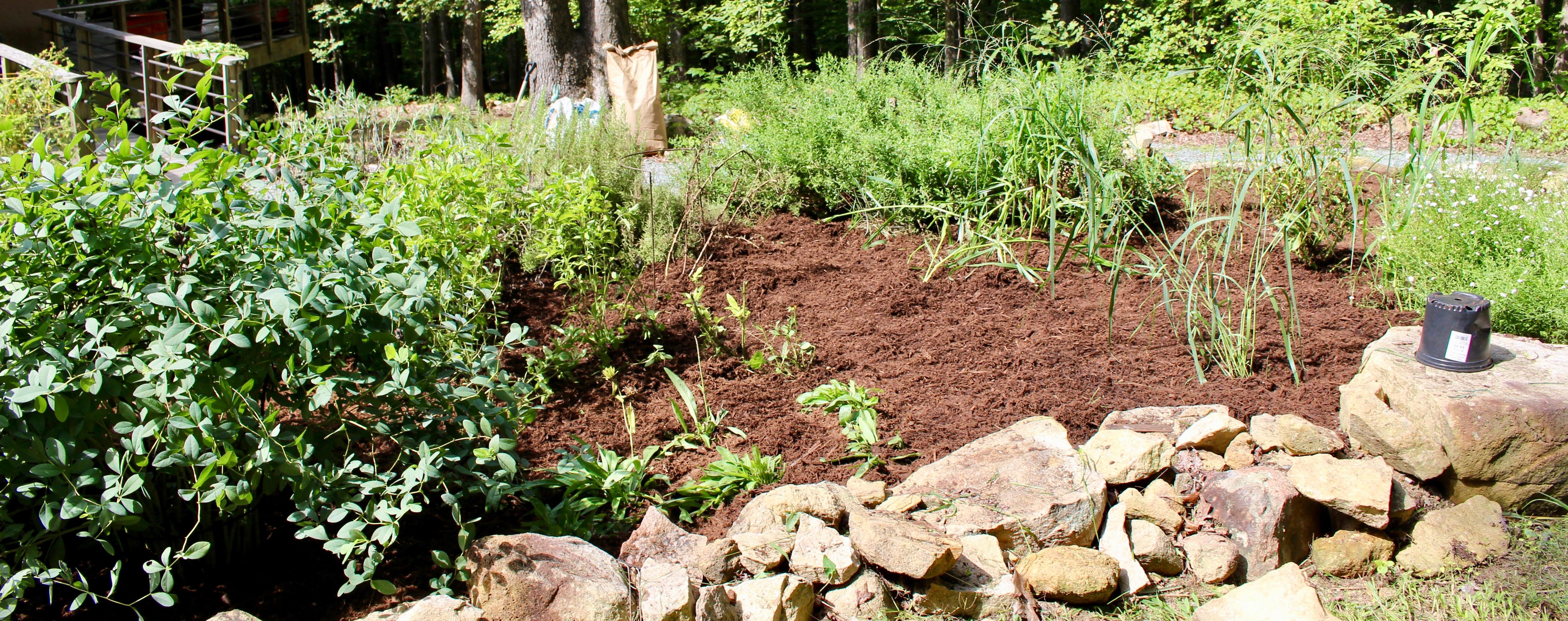 piedmont gardening | Piedmont Gardener