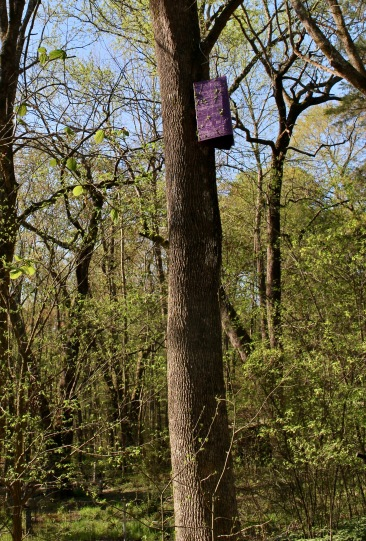 Slightly adorned with bits of bladdernut, trap#1 is successfully hung.