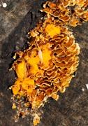 Happy fungus on oak log