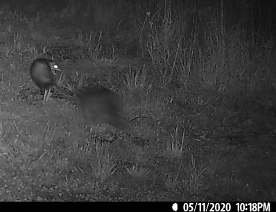 That's the possum snarling in the upper left side of the photo.