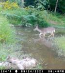 doe crossing creek_9_24